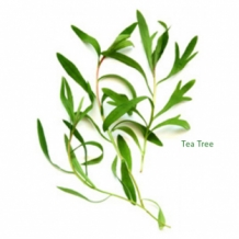 | Tea Tree etherische olie
